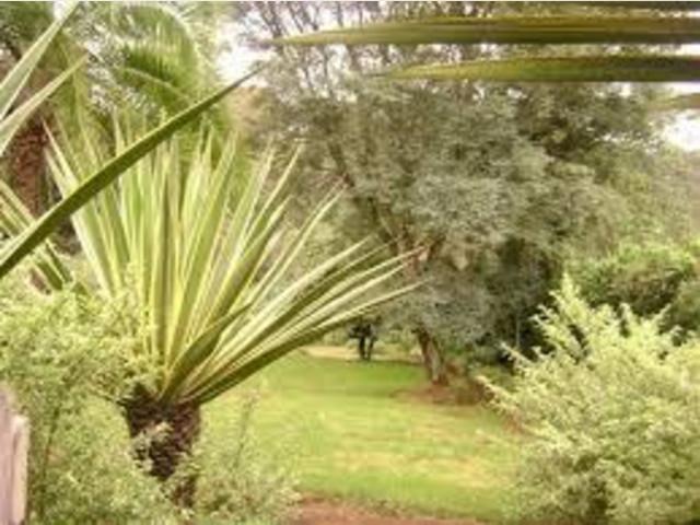 Kenya holiday rentals in Tigoni, Tigoni