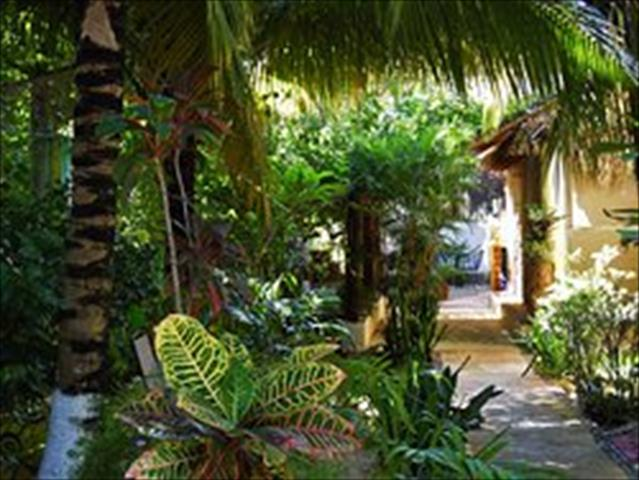 For Rent 1 bed Apartment in Tulum Quintana Roo Mexico, 725 ...